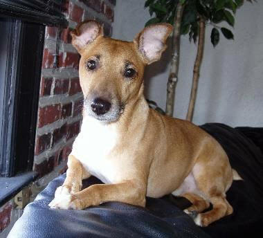 BUSTHA / Jack Russell BX NY